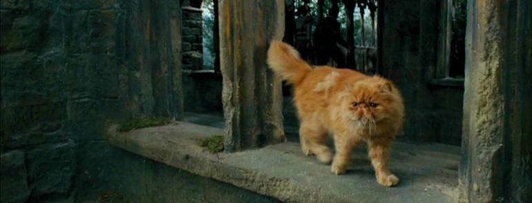hermione fra harry potter