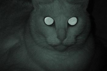 Can Cats Smell Ghosts