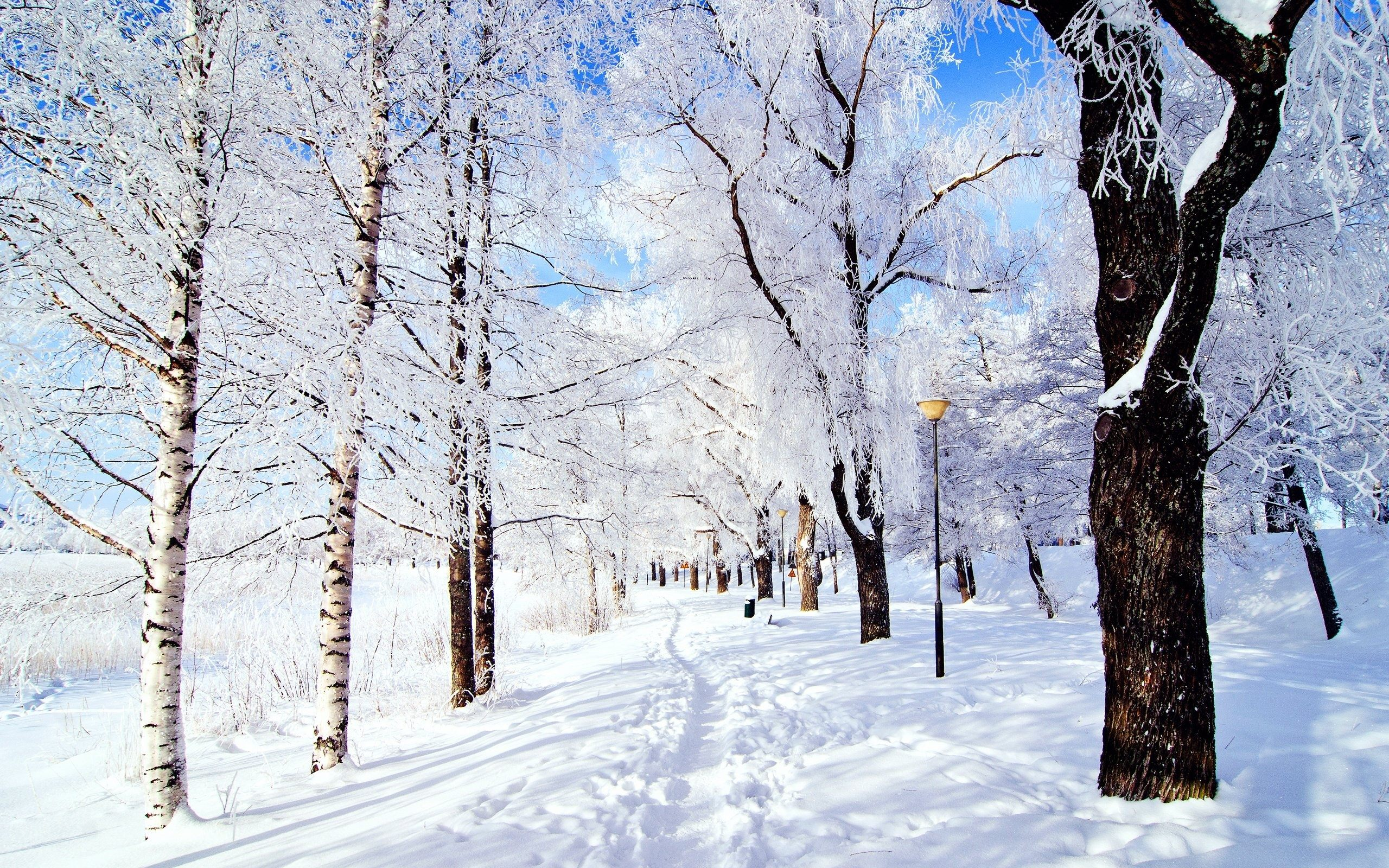 10 Snow Facts To Make You Feel Festive The List Love: beautiful snowfall pictures