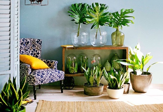 plants home decor
